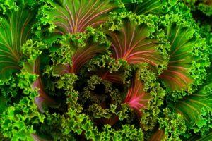 eating Vegetables for Gains